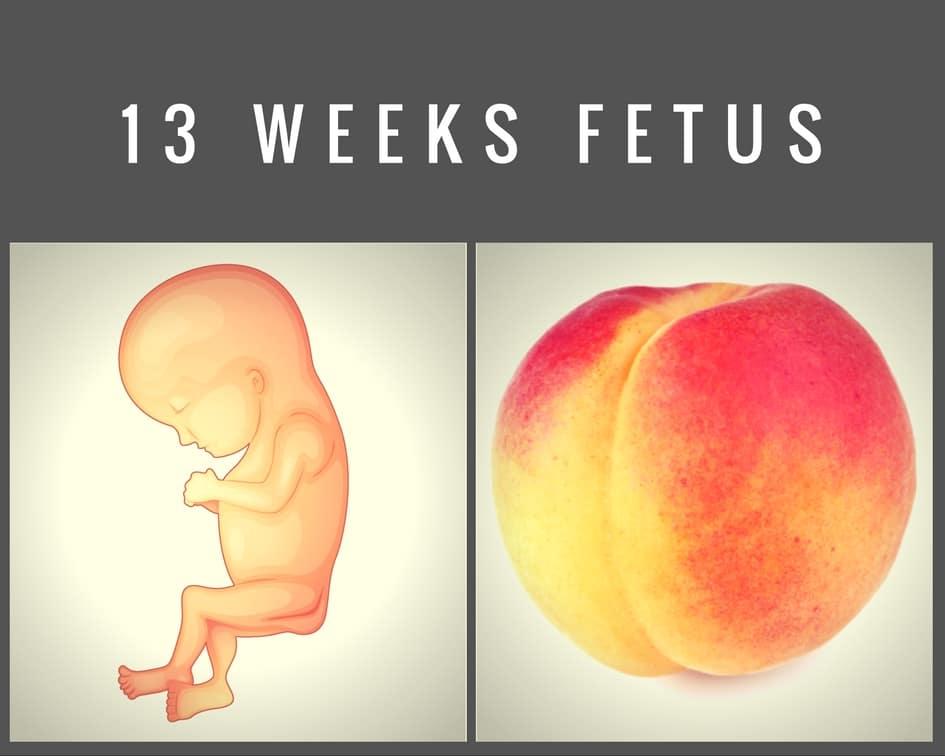 13 weeks fetus